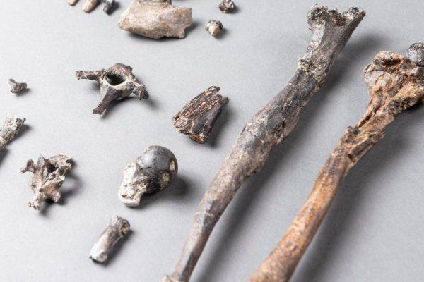 Απολιθωμένα οστά
